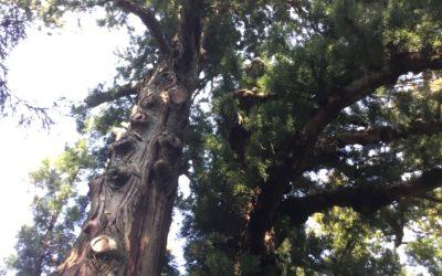 旅行記:塩原八幡宮のスピリチュアル旅行